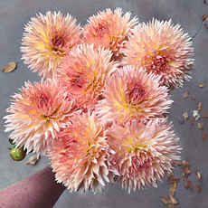 Lakeview Peach Fuzz dahlia tubers for sale